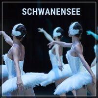 Schwanensee münchen 2020